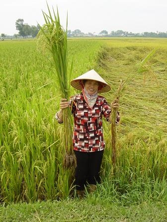 Food Security, Sustainable Rice Farming and Equipment