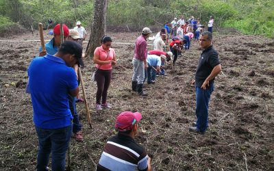 SRI Training for Smallholder Rice Farmers in Nicaragua