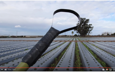 Featured Tool: Ring Hoe Weeder